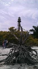Florida Sanibel uprooted tree w lighthouse