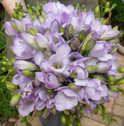 images 058 spriggs florist