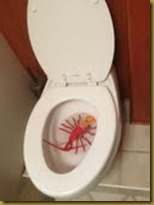 lobster in toilet