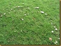 IMG_2232 fungi ring