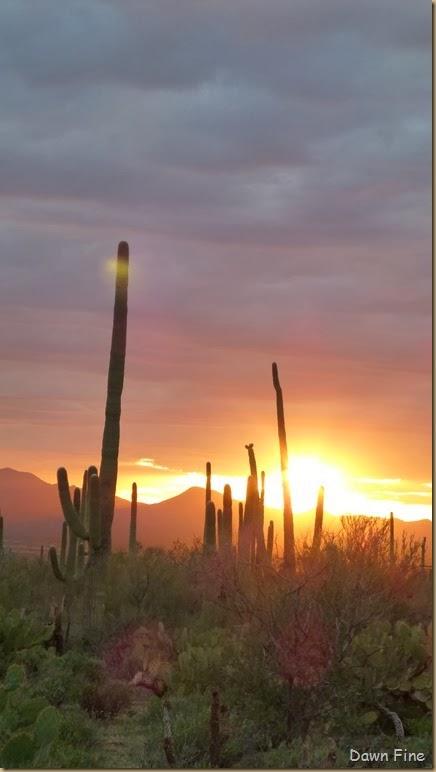 Saguaro NP West_115