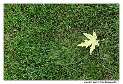list_v_trave