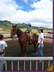 horse rescue 035
