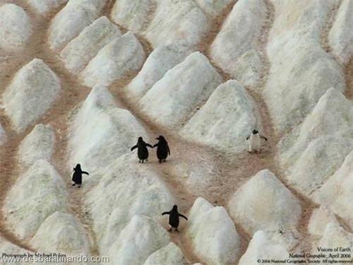 animais national geographic desbaratinando  (40)