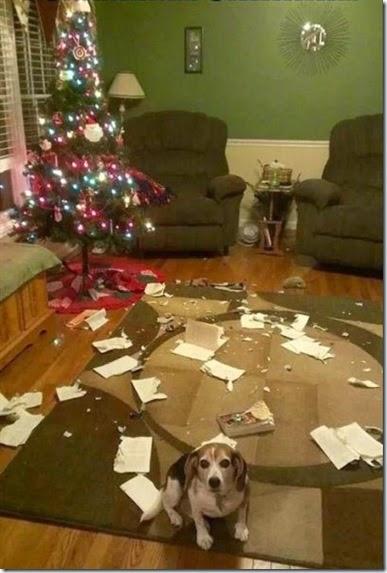 pets-hate-christmas-015