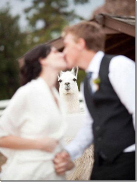 perfect-wedding-photo-7