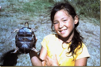 turtle-2