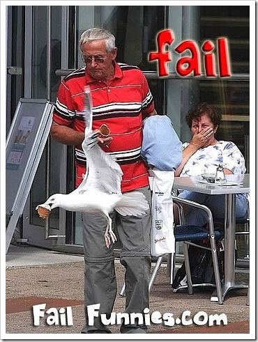 Man vs Seagull - Seagull Wins.