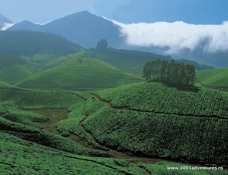 Vacanta Kerala: India de Sud