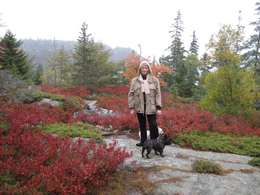 Here we are at a higher elevation.  Those red scrubby bushes are wild Maine blueberry with their autumn foiliage.  They seem to grow everywhere - even on these granite rocks!