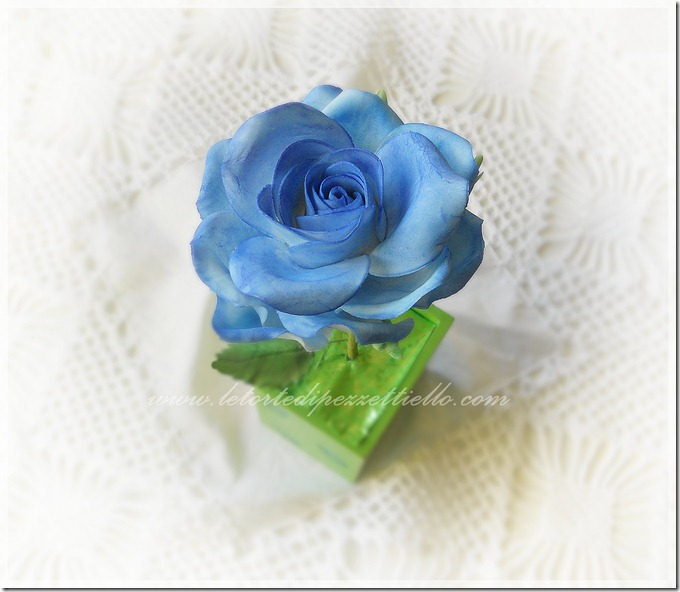 DSCN8011rosa blu