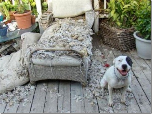 funny-cats-dogs-destroy-house-025
