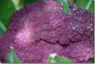 Brócolos roxos  DSC_0472DSC_047506