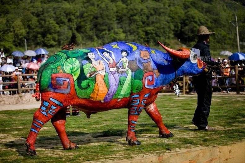 buffalo-bodypainting-4