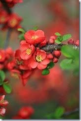 flores vermelhas 02