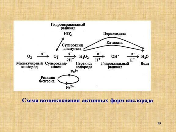 fiziologiya-rasteniy-prezentatsiya