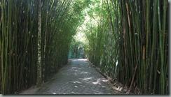 Bambual
