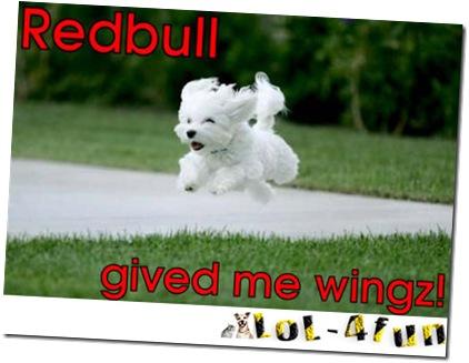 http://lol-4fun.blogspot.com/ Dogs vs Cats