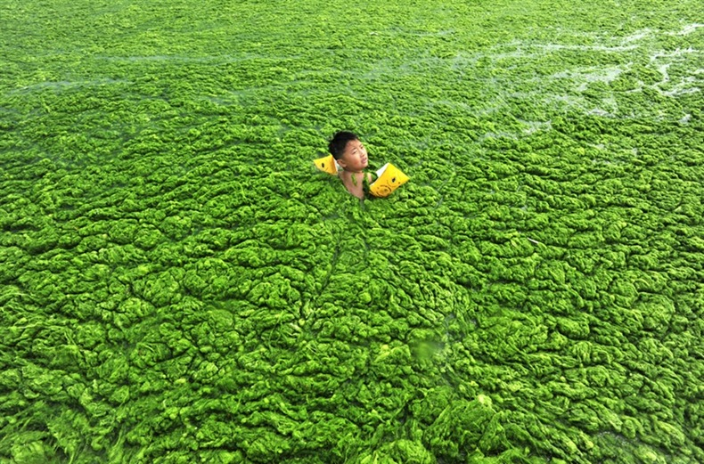 chinese-algae1
