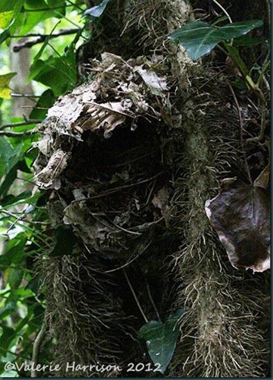 7-wrens-nest