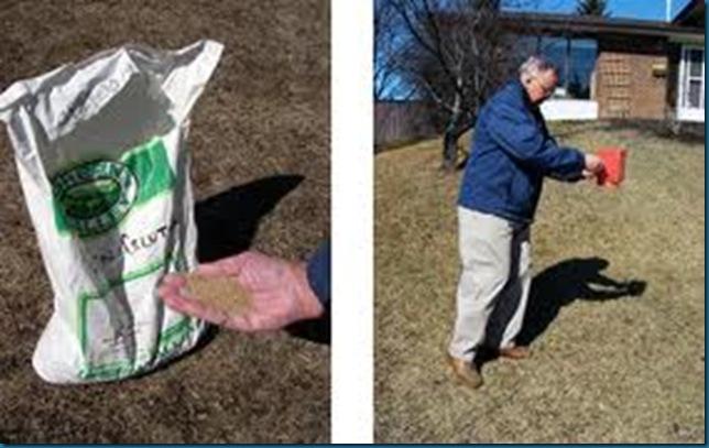 corn gluten applied to prevent weeds