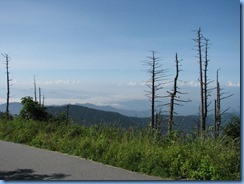 0307 Tennessee-North Carolina border - Smoky Mountain National Park - Clingmans Dome Rd - trail to Clingmans Dome