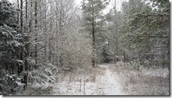 early snow woods 2