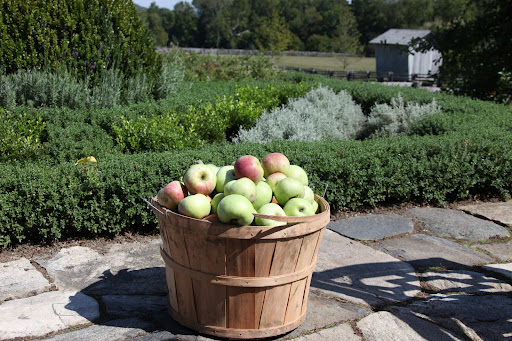 Did you know that one bushel of apples weighs about 42-pounds?  And just in case you're wondering, a 'peck' of apples weighs 10.5-pounds.