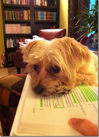 lydia studying