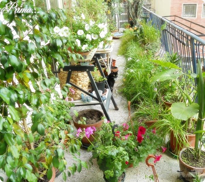 soffiodidea-piante-2