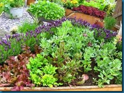 lavender in veggies