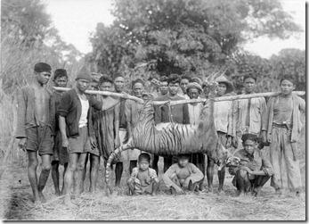 COLLECTIE_TROPENMUSEUM_Een_groep_mannen_en_kinderen_poseert_bij_een_pas_geschoten_tijger_te_Malingping_in_Bantam_West-Java_TMnr_10006636