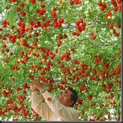 pg-09-epcot-tomato-tree-giant-vegetables-full