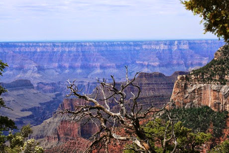 Dead Tree - Grand Canyon NP-1