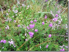 bell heather and ling