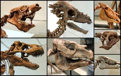 ROM dinosaur heads