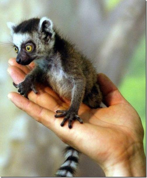 funny-animals-cute-24