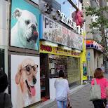 pet shop roppongi in Tokyo, Tokyo, Japan