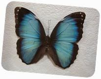 бабочки 121