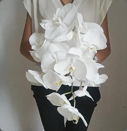 phals 1000940_522174221186810_873924428_n flowerbazar