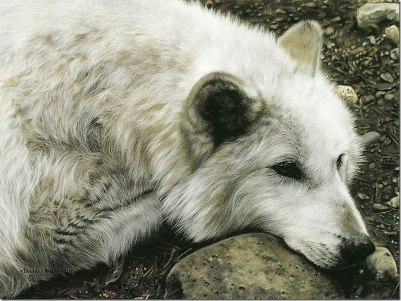animales tiernos (9)