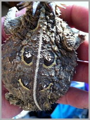horny toad with a smiley face