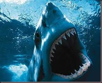 Amazing Animals Pictures White Shark (3)