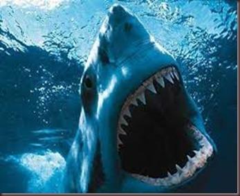 Amazing Animals Pictures White Shark (3)