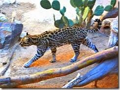 AZ desert museum w Steve Kitty 030