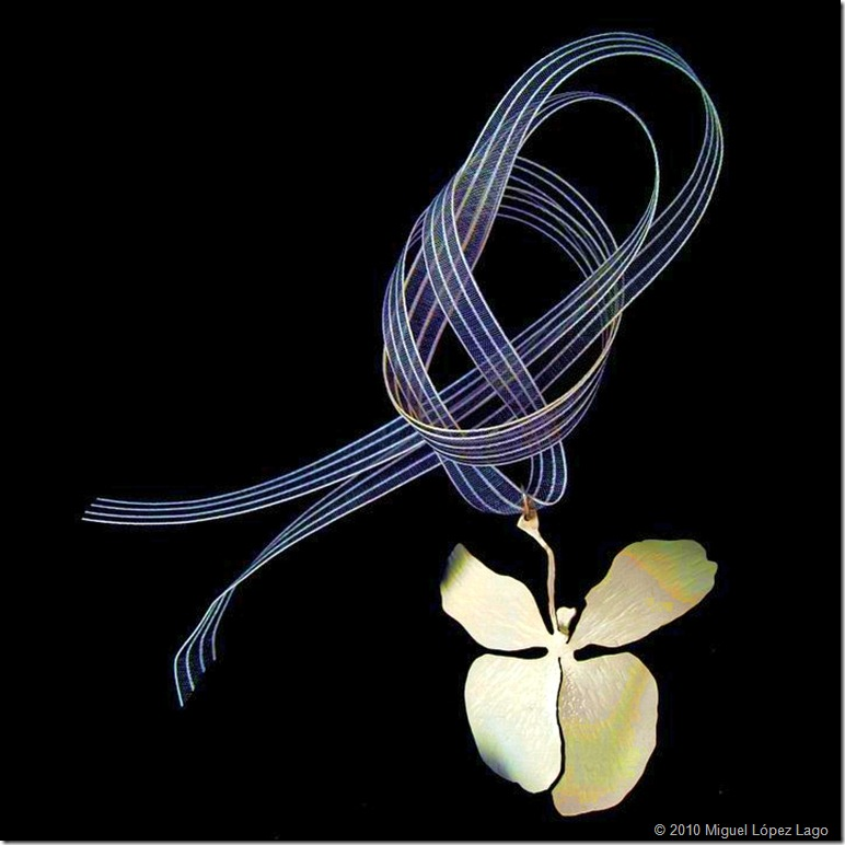 Dolores Lago_Mariposa blanca (flor nacional de Cuba)