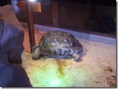 2012.08.05-021 tortue