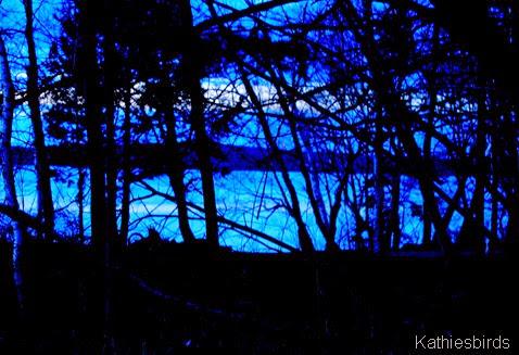 15. indigo night-kab