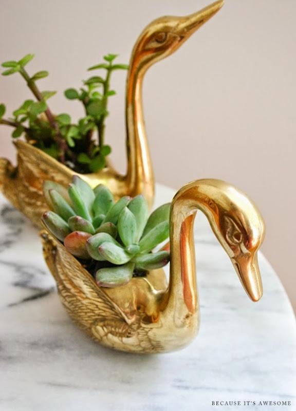 9 bia_oneroomchallenge_succulent planters
