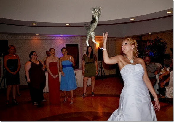 cat-toss-weddings-16